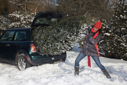 How to safely attach a Christmas tree to a car