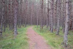 Speyside Kiltwalk –  A wander down the River Spey