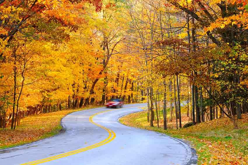 Follow our top tips to ensure that driving in autumn is as peaceful as possible.