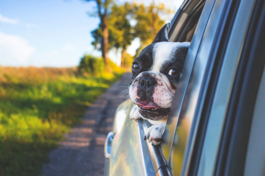 When you're as adorable as this, you expect a car that's canine-capable.
