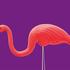 £20 flamingoes a long way