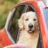 Make sure your pets are safe on any car journey
